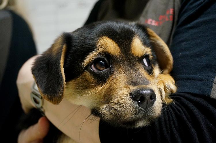 køb hund fra dyreinternat