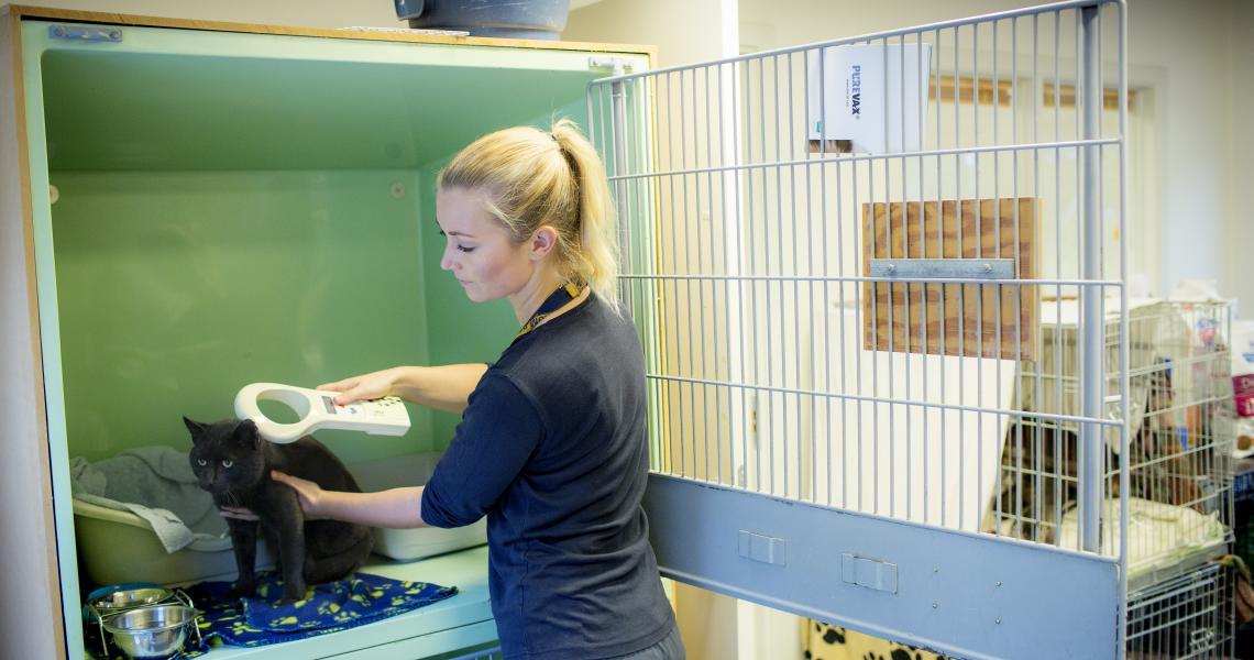 2 ud af 3 dyreejere sygeforsikrer ikke deres dyr | Dyrenes Beskyttelse