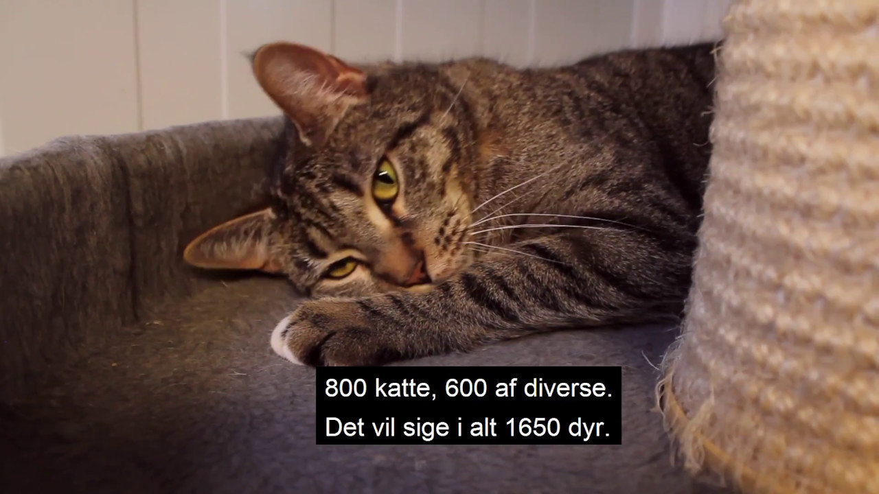 dyrenes beskyttelse find dyr